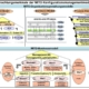 Modellinhalte des MITO-Businessmodells
